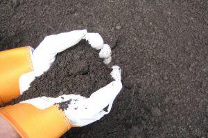 soil topdressing